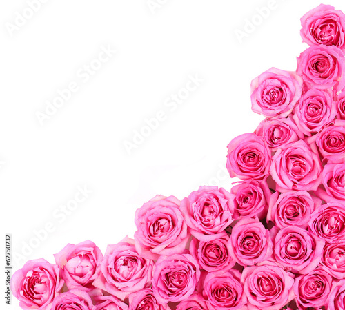 Hot Pink Roses over white