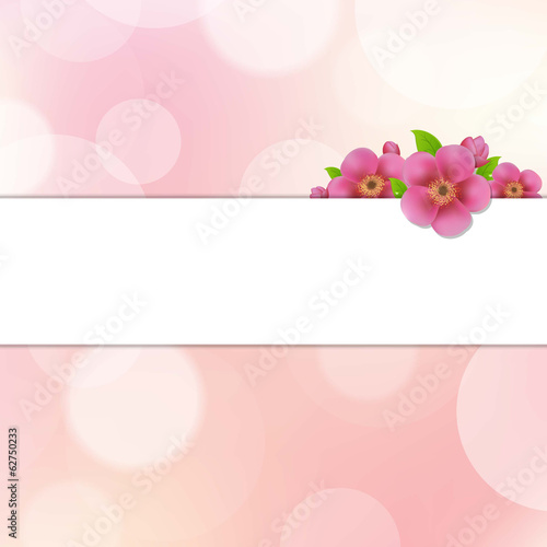 Bokeh Background With Sakura Flowers