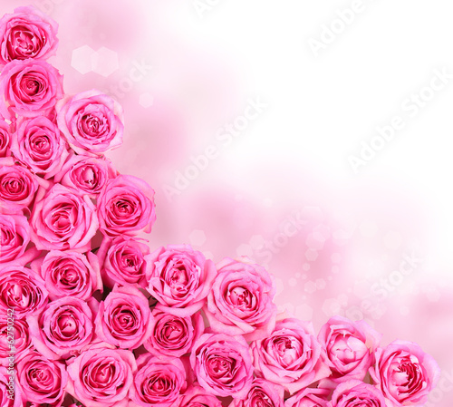 Hot Pink Roses over white background. Border