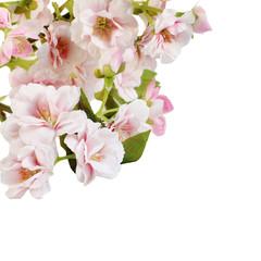 Pink spring blossom border