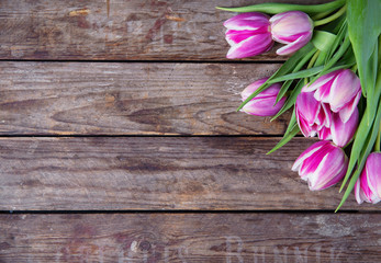 tulips on an old rustic wooden background