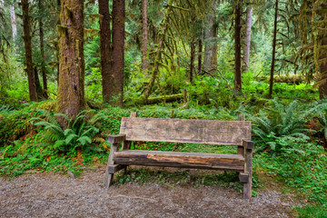 Empty Log Bench in the Forest