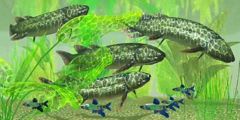 Dipterus macrolepidotus Fish