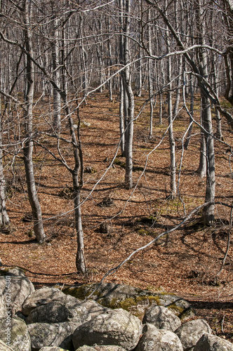 Moraines and leafless beech forest on late winter sunny day