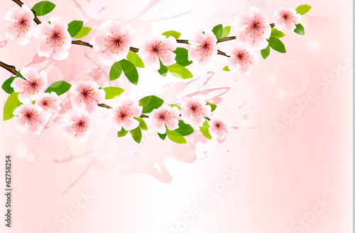 Spring background with blossoming sakura branches. Vector illust