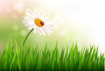 Spring background with a daisy and a ladybug. Vector.