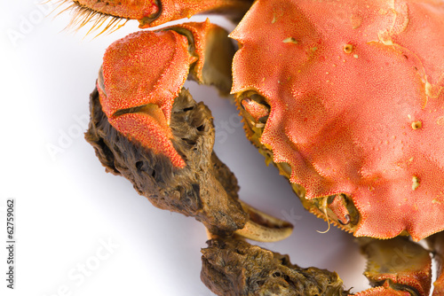 close up of a cooked crab on white background