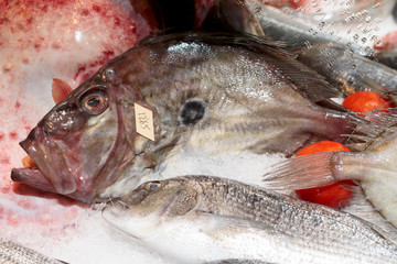 John Dory fish on market stall
