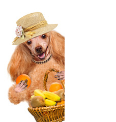 Dog with fruits over white banners