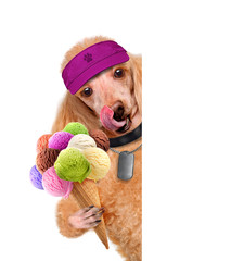 Dog with ice cream over white banners