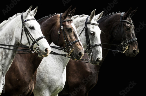 Plexiglas Paardensport Four horses in dressage competition isolated on black