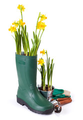Daffodils in gum boot and gardening tools