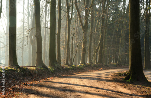 Empty lane in a forrest