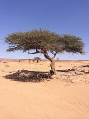 albero nel deserto