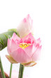 isolated image of the fake flower with pink lotus on white backg