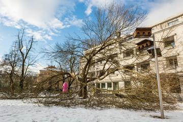 Broken tree infront of a building