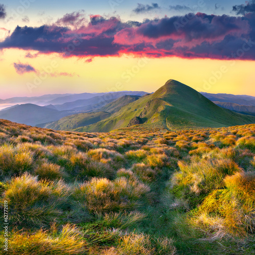 Colorful summer landscape in the mountains.