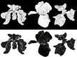 six iris flowers sketches