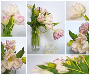 White and pink delicate tulips. Gift postcard. Collage
