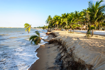 Eroded beach with palms, Pititinga, Natal (Brazil)