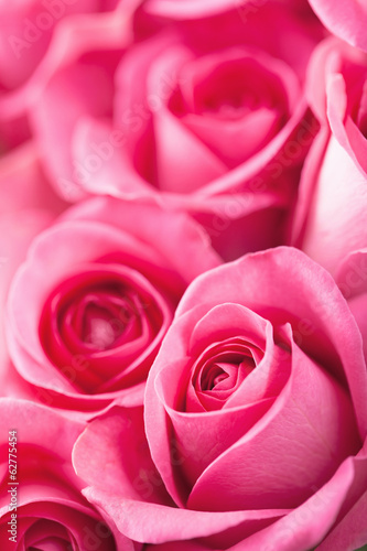 beautiful pink roses background closeup
