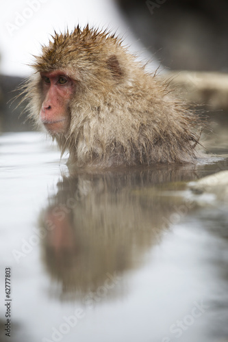 Snow monkey taking a dip in hot spring