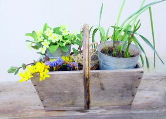 panier de plantes et fleurs de saison