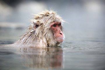 Snow monkey in a natural onsen (hot spring)