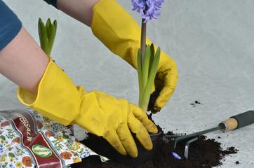 gardener - hands