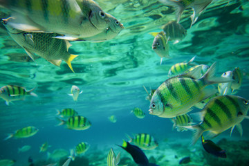 Colorful of fishes with ripples of sunlight reflected on the oce