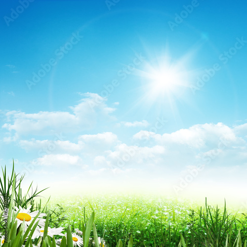 Beauty summer, abstract environmental backgrounds with daisy flo