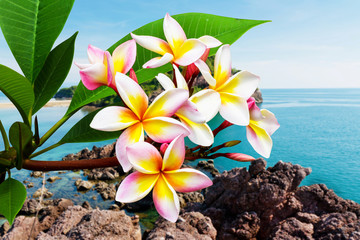 Leelawadee flower at beach