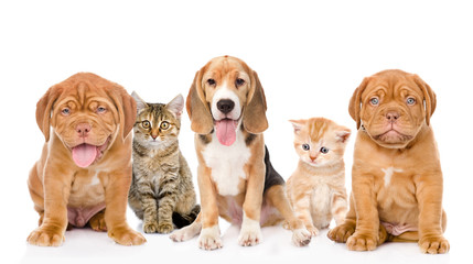 large group of cats and dogs sitting in front. isolated on white
