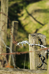 Rusting barbed wire on wooden fence