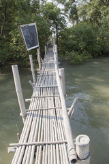Bamboo bridge leading to mangrove forest