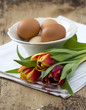 Tulip and Egg on wooden table