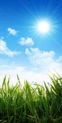 growing grass under sunny sky