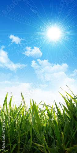 growing grass under sunny sky