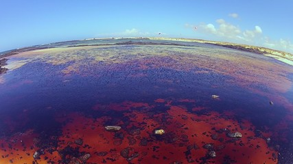Red algae on the El Cotillo sea, Fuerteventura (fish-eye shoot)