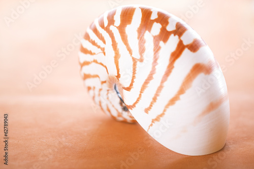 nautilus pompilius shell on leather,