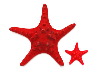 Two red sea star