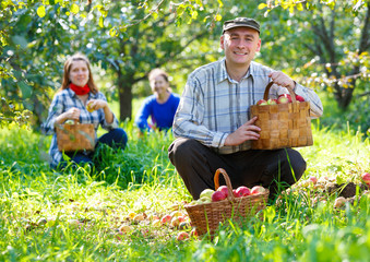group of people gathers apple harvest