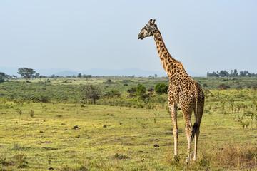 Tansania-11503