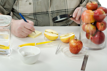 Halved apple inspected in phytocontrol laboratory