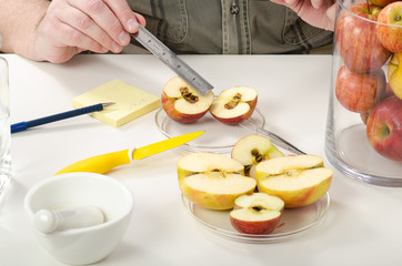 Measuring the diameter of the rotten apple