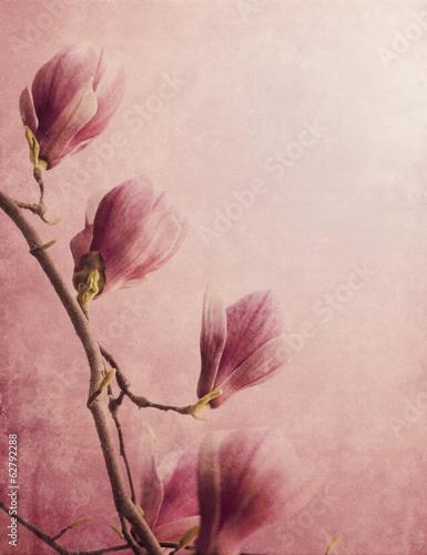 Obraz na płótnie Magnolia
