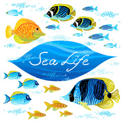 Vector set of sea animals. Elements for design.