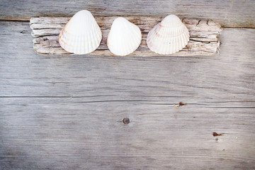 Travel  background - wood  and seashells