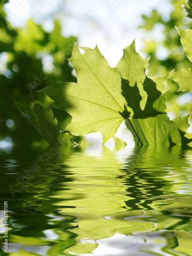 Green leaves and water surface