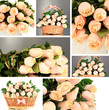 Collage of roses closeup